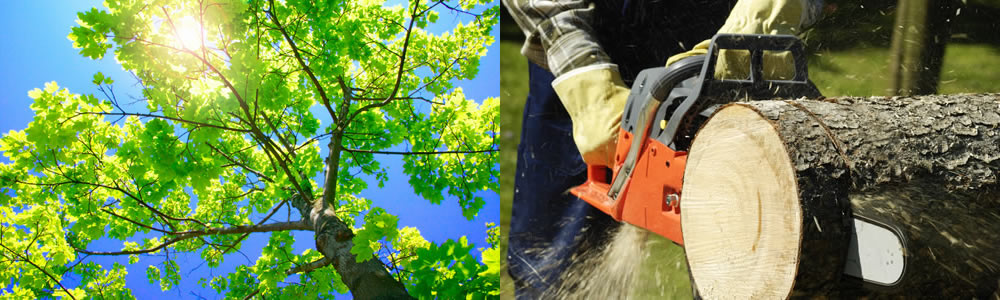 Tree Services Berwyn
